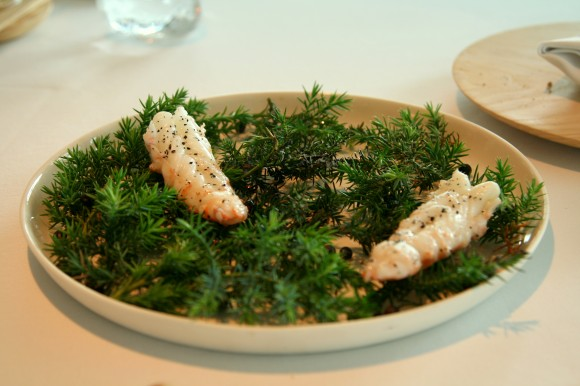 grilled langoustine in juniper aroma with red elements